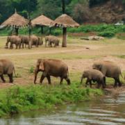 Utočišta za slonove Chiang mai