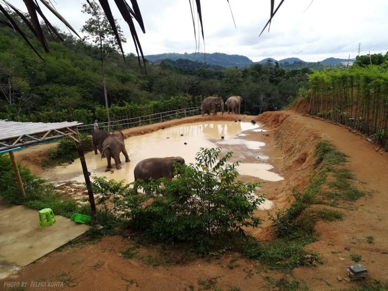slon u blatu Tajland