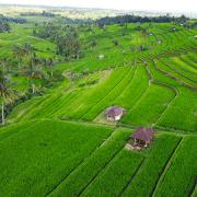 Covid-19 akcija za Bali. Let + 9 noćenje za samo 480 eura