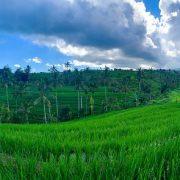 Putopis s Balija – Ubud i okolica